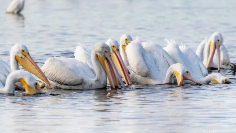 Like Big White Vacuum Cleaners, Pelican