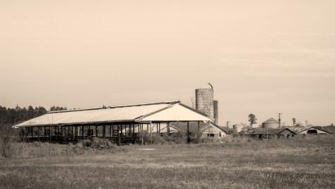 Monochrome Farm Scene, South Carolina