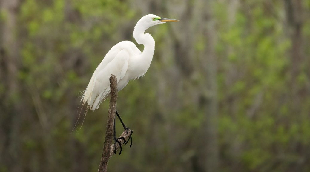 The High Ground, Egret