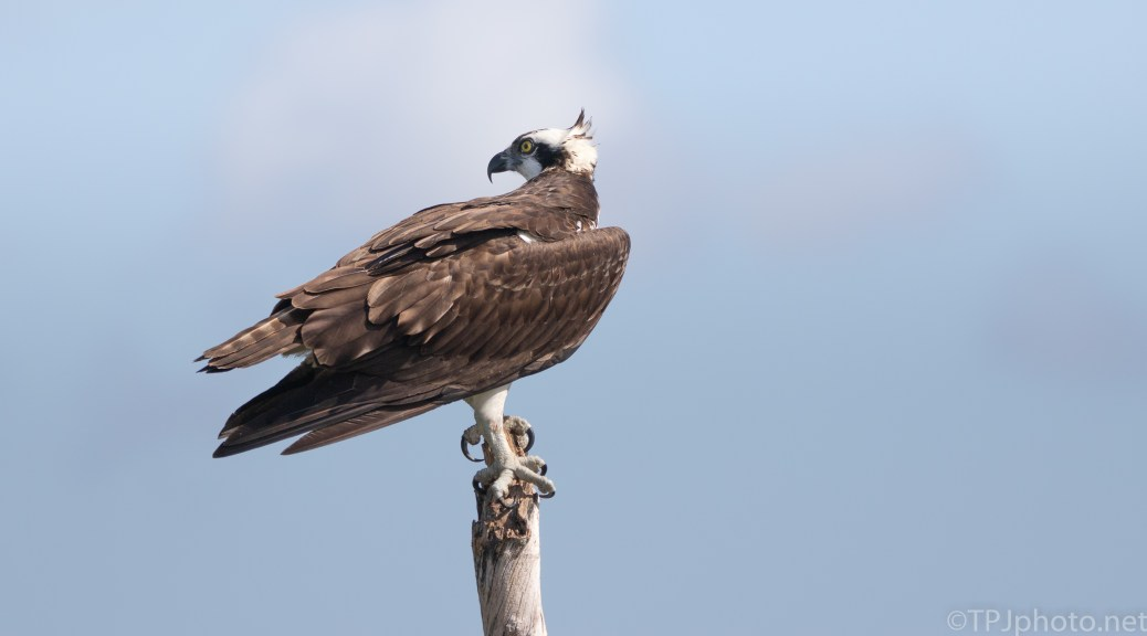 The High Spot, Osprey