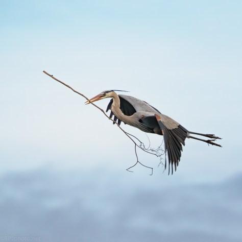 Over Achiever, Heron