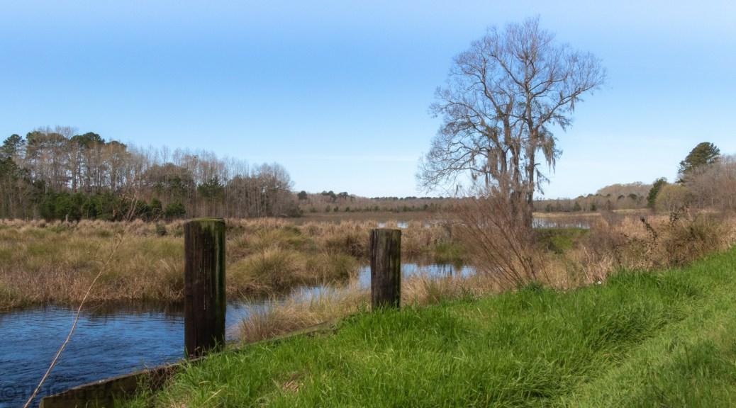 A Marsh Trail