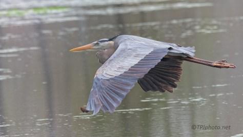 Passing Through, Heron