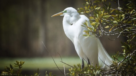 Being Patient, Egret