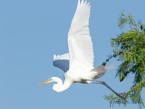 Leap Into Space, Egret