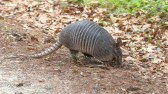 People Are Surprised, Armadillo