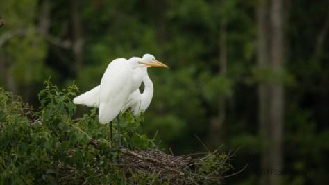 Almost Grown, Egret
