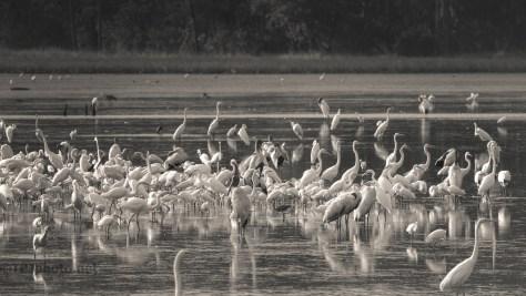 A Gathering