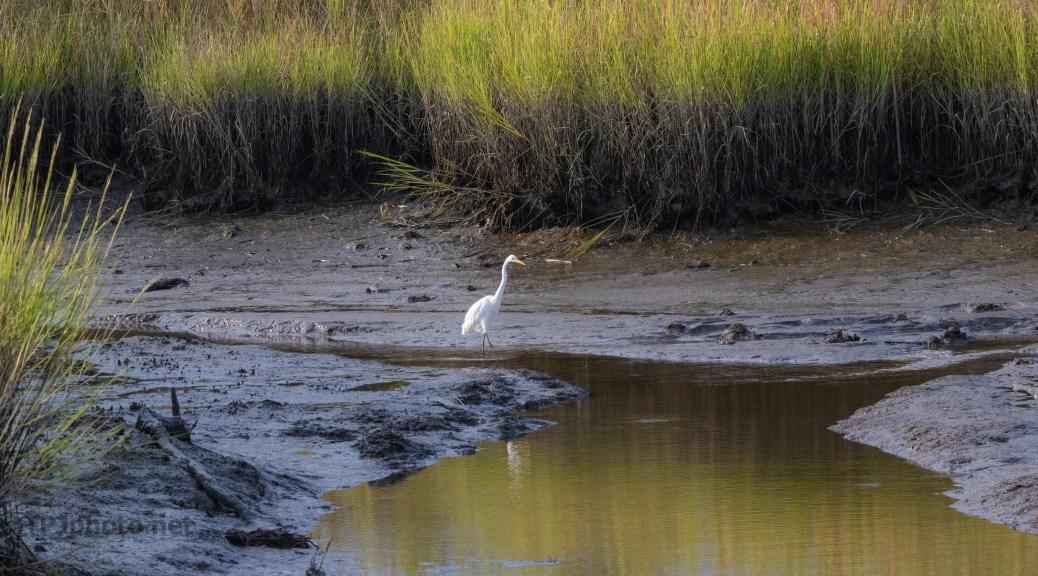 Salt Marsh Mud...And Egret