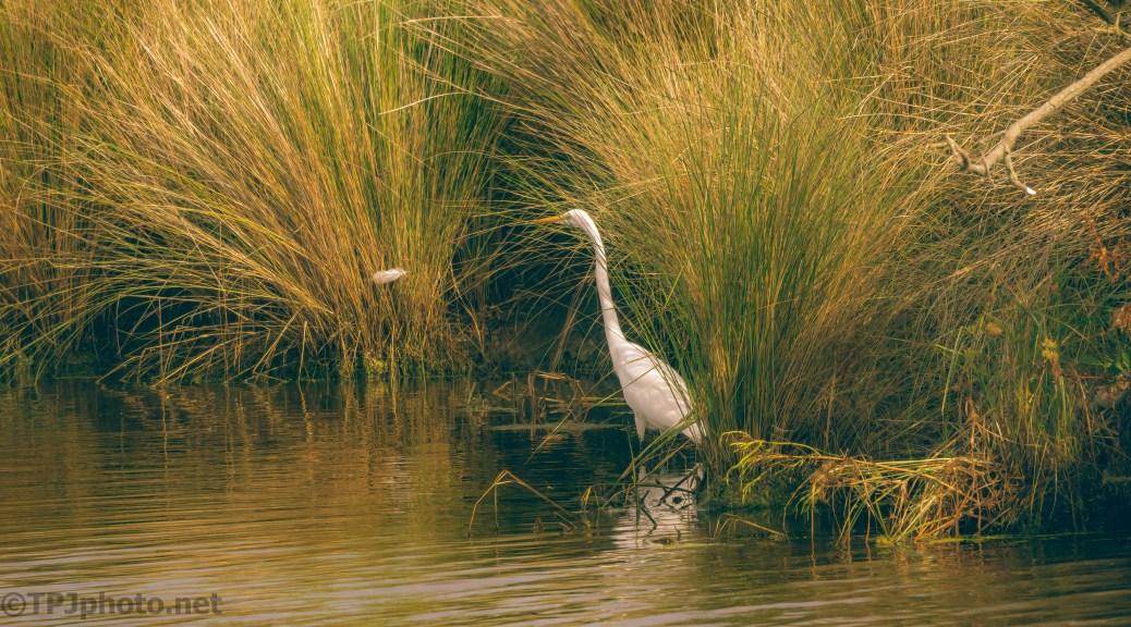 An Egrets Secret Spot