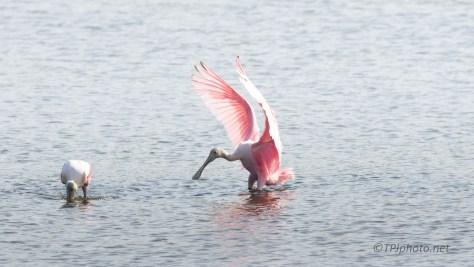 Pink Landing