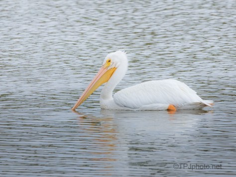 On His Own, Pelican