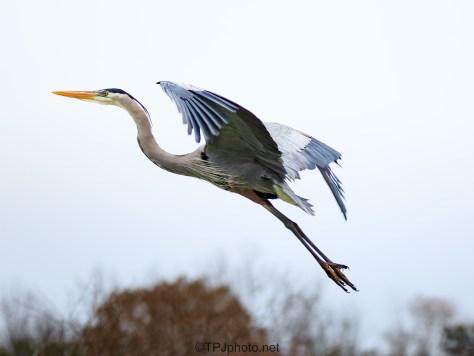 A Heron Glide