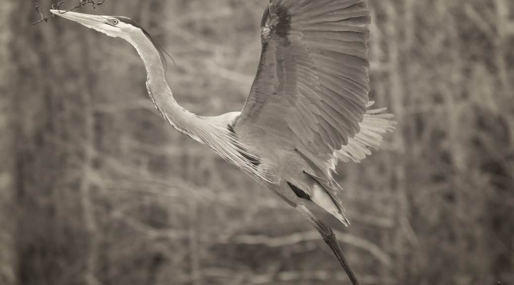 Great Blue Flight, Monochrome