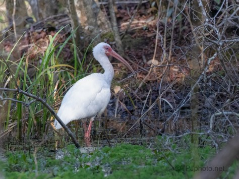 Ibis, Where They Love To Be