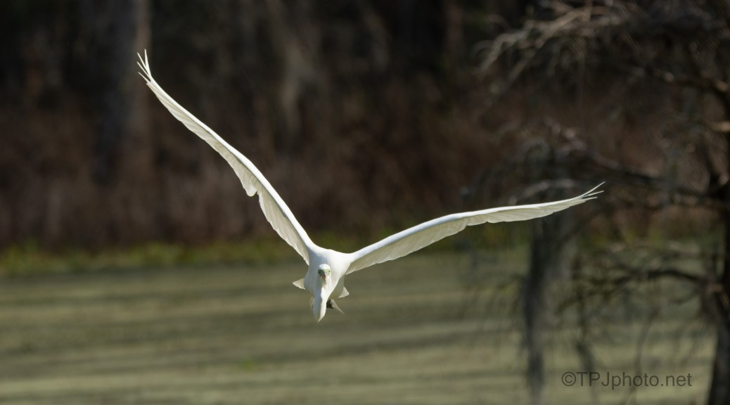 In My Face, Egret