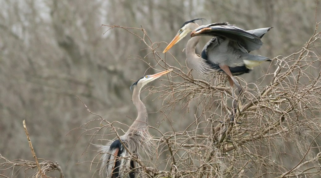 At The Nest, Herons