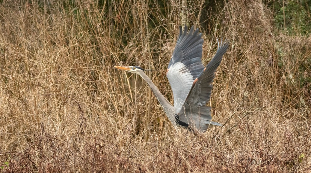 Out Of The Reeds, Heron