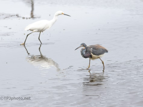Egret And Heron, Fishing Was Good