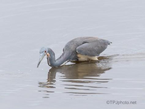 Got It - Don't Want It , Heron