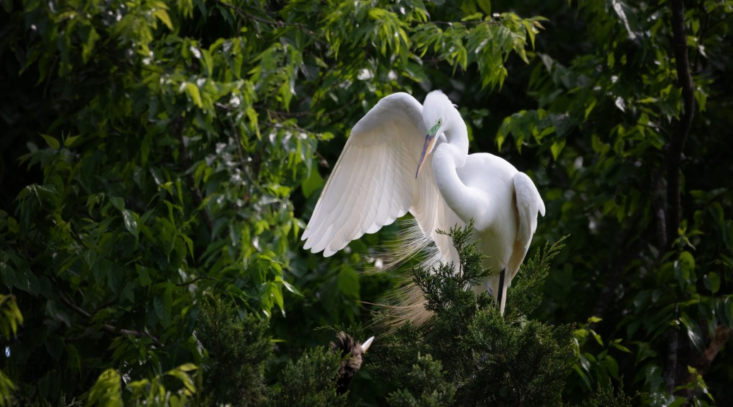 Trouble, Anhinga And Egret