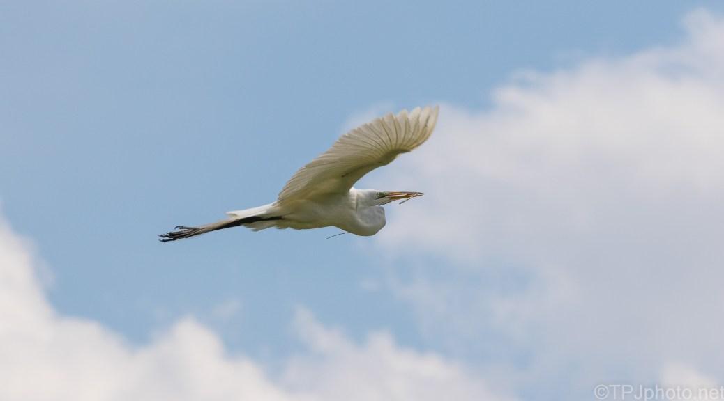 White Puffy Clouds, An Egret