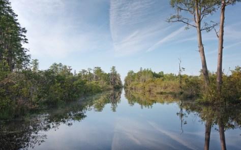 Swamp Scenes