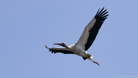 Can Hear The Wings, Wood Stork