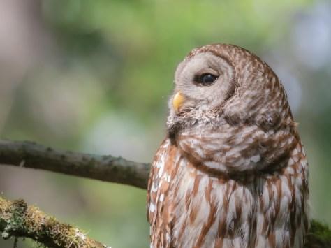Watching Owls