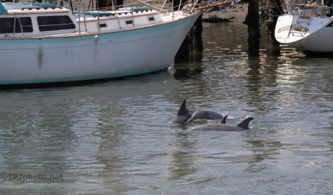 Passing Through The Piers, Dolphin
