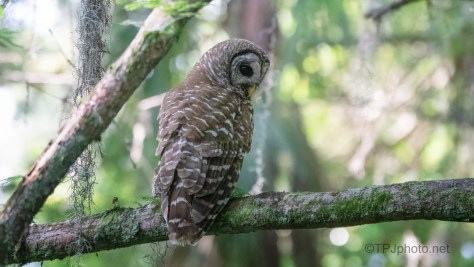 More Waiting, It's What They Do - Owl