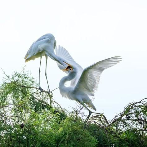 Free Food, Egret