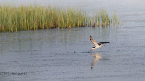 Marsh Skimmer