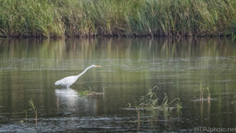 Pretty Marsh Scene With Egret