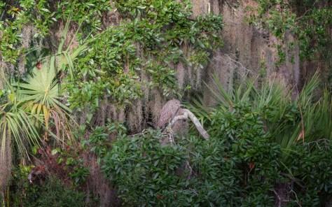 Like A Jungle, Night Heron