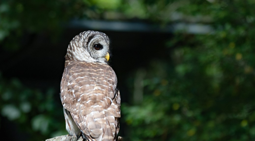 Everyone Loves An Owl