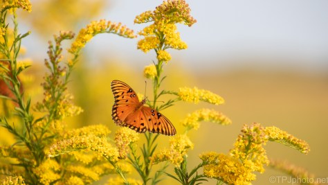 Pleasant Surprise, Butterfly