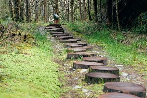 保護地被苔原的原木步道