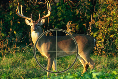 deer kill zone diagram 7 pin color code shots to the vital areas — texas parks & wildlife department