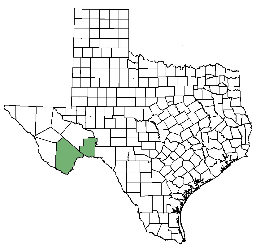 Bunched cory cactus: Federal & State Listed Plants of Texas