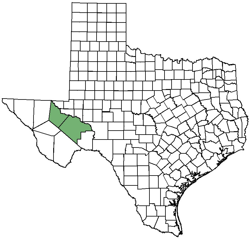 Pecos sunflower: Federal & State Listed Plants of Texas