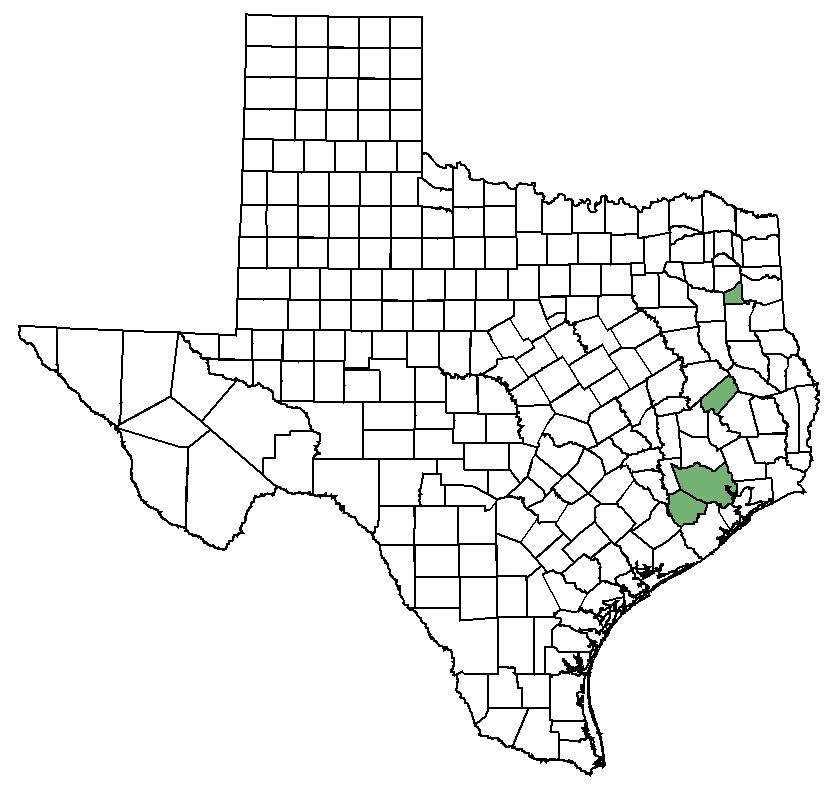 Texas prairie dawn: Federal & State Listed Plants of Texas