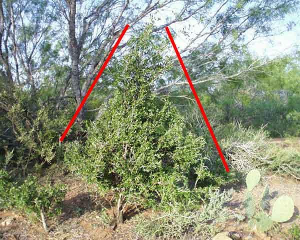 Land South Texas Brush Plants