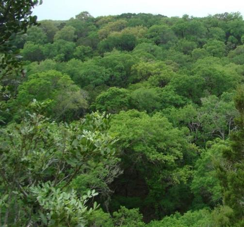 edwards plateau dry-mesic slope