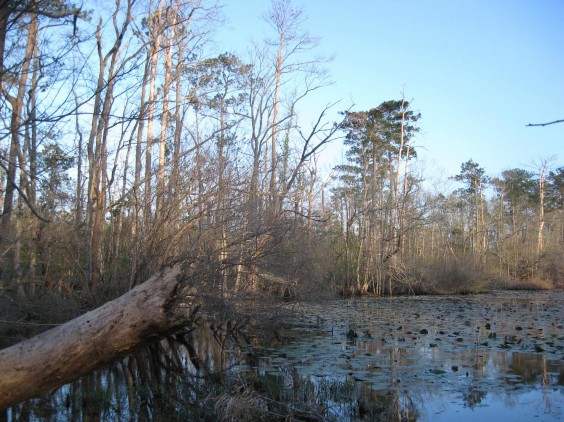 West Gulf Coastal Plain Flatwoods Pond Texas Parks Amp Wildlife Department
