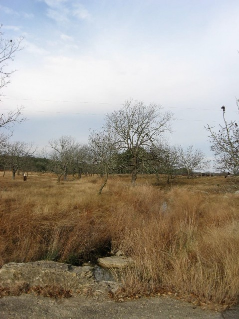 Edwards Plateau Riparian — Texas Parks & Wildlife Department