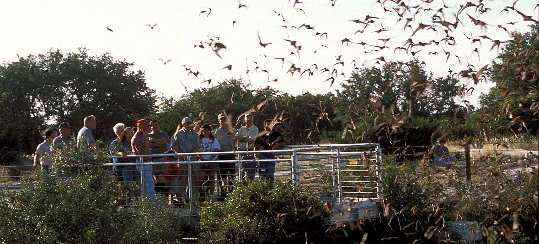Devils Sinkhole State Natural Area  Texas Parks