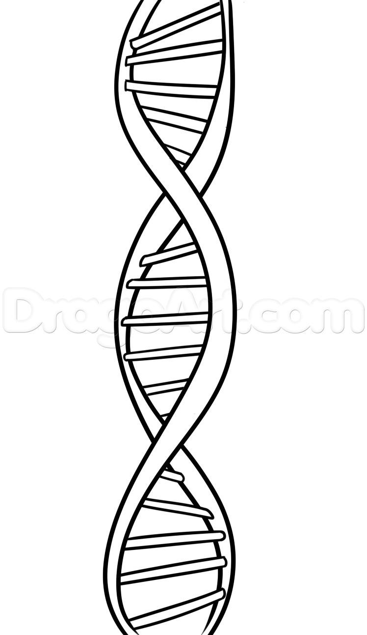 BASİT BİR DNA ÇİZİMİ saçma sapan cevap yazanlar şikayet