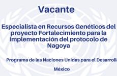 Vacante Especialista en Recursos Genéticos del proyecto Fortalecimiento de capacidades nacionales