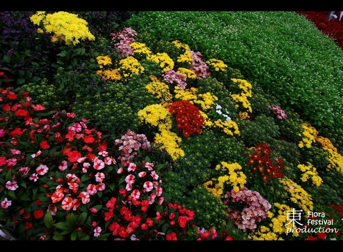 Resultado de imagem para flora brasileira